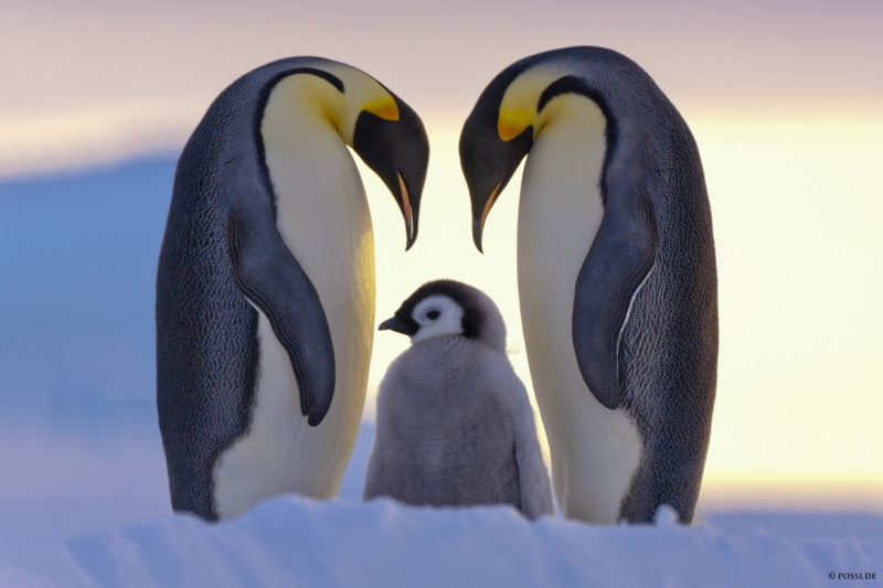 Parents Love by Anneliese & Claus Possberg
