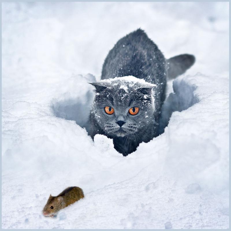 An animal hunting by Iliya (djump) Pavlov
