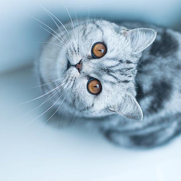 45度角仰望天空的猫