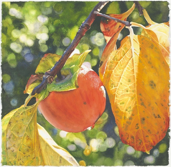 美国水彩画家Cara Brown作品