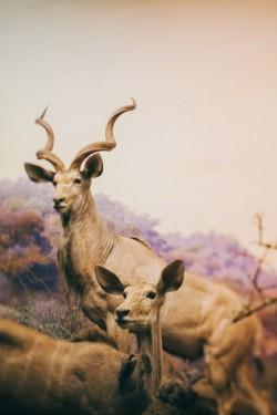 地球上最美的羊群 鹿 丹顶鹤 青蛙 狗 猫头鹰 熊 羊 荡秋千的狗 狗
