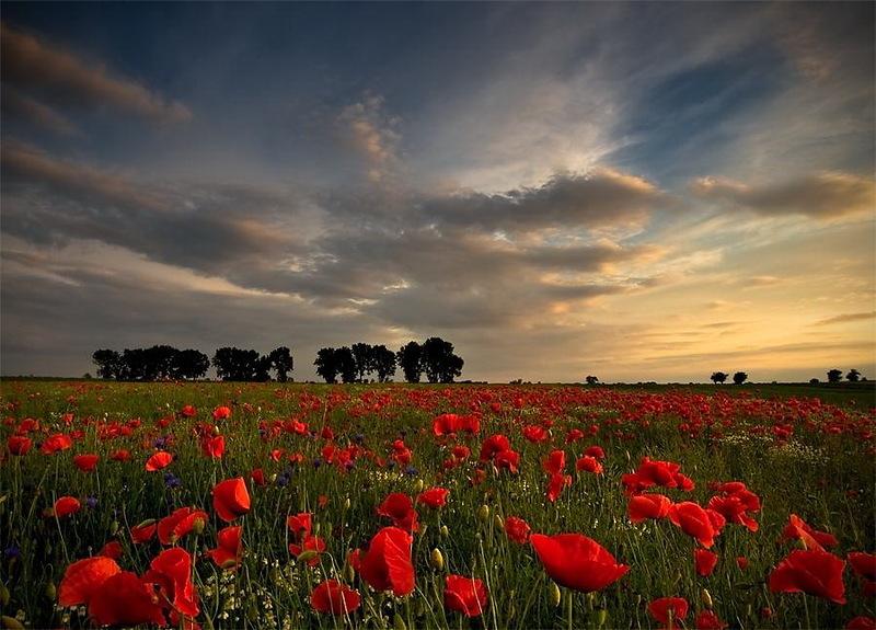 鲜花与天空(一)