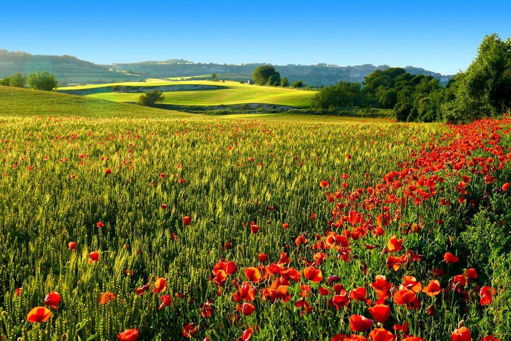 鲜花与天空(二)
