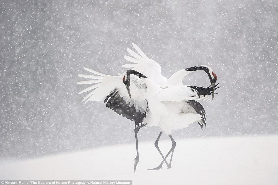 10个野生动物摄影师的得意之作