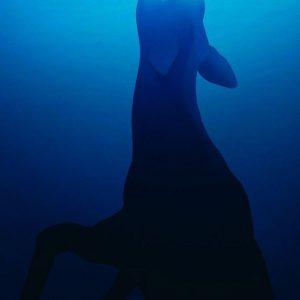 WWF: Melting Ice Caps - 世界自然基金会广告:冰山消融威胁物种生存
