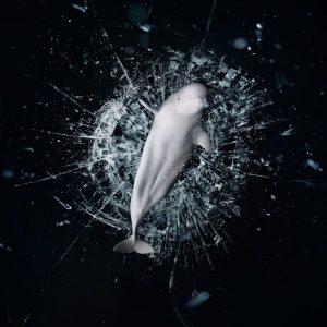 Sea Shepherd - 美国海洋守护者协会公益广告:停止支持海洋动物表演