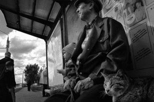 哈萨克斯坦流浪猫 | Evgeniya Gor摄影作品