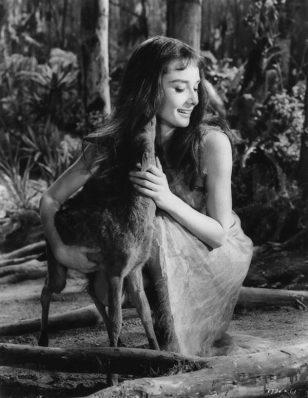 奥黛丽·赫本和她的鹿Pippin