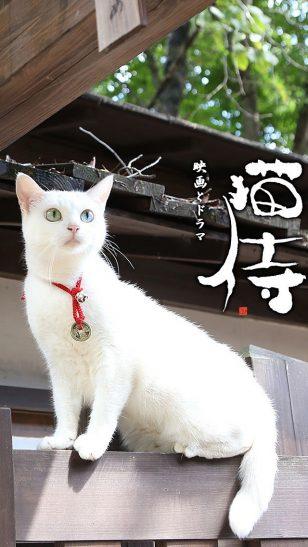 Neko Samurai - 《猫侍》电视剧海报