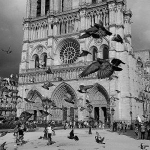 Notre-Dame - 巴黎圣母院