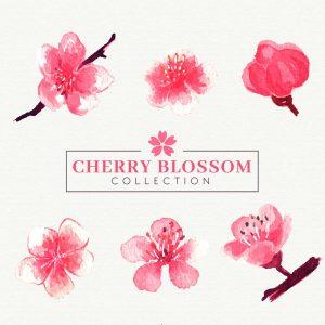 6款粉色樱花设计矢量素材