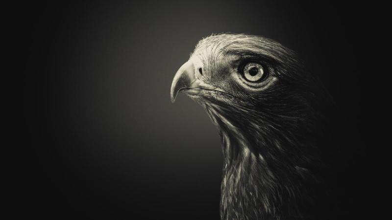Black Hawk by Shay Wax