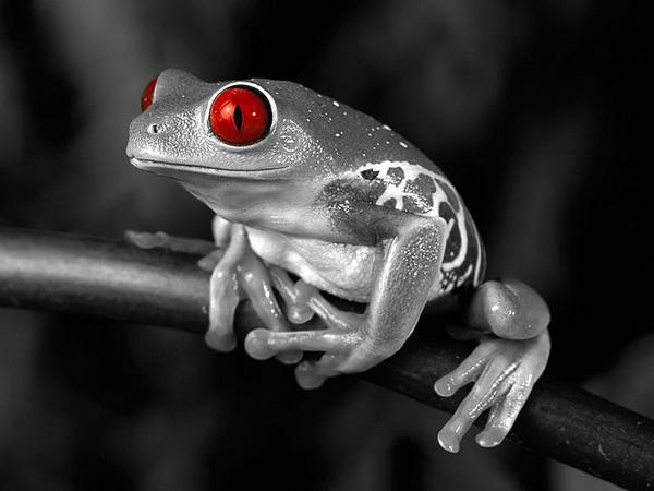 创意摄影:黑白世界的一抹红