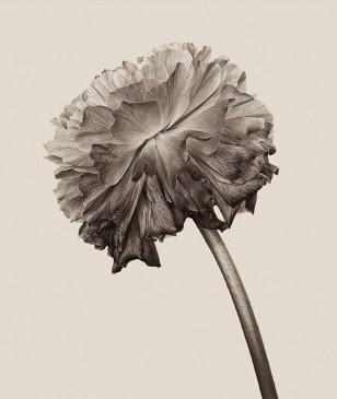 Bettina Güber摄影作品:花