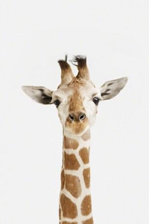 Sharon Montrose - 摄影师Sharon Montrose拍摄的动物幼崽系列