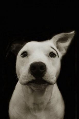 Traer Scott - Traer Scott的动物摄影
