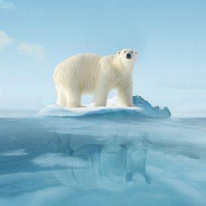 WWF: Species at Danger - 世界自然基金会广告:生存受到威胁的物种